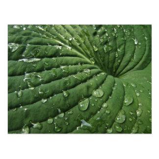 Gouttes de pluie sur la carte postale de feuille