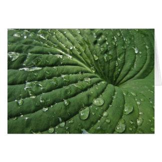 Gouttes de pluie sur la carte vierge de feuille de