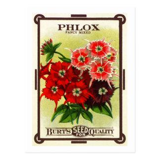 Graines de Phlox de Burt Carte Postale