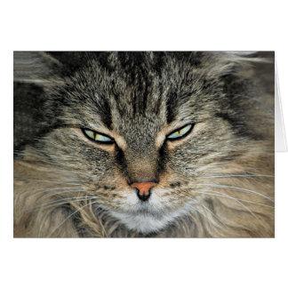 Grand anniversaire de chat de visage carte