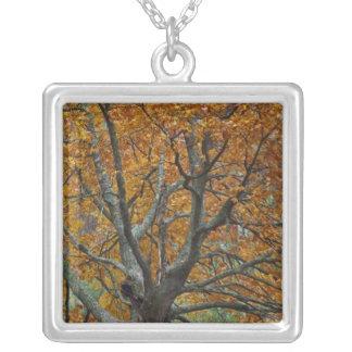 Grand arbre d'érable en automne, lac bas, près de pendentif carré