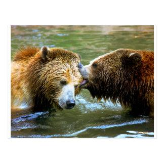 Grand baiser d'ours gris carte postale