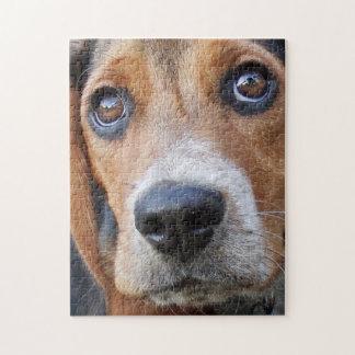 Grand chiot de beagle observé par Brown Puzzle