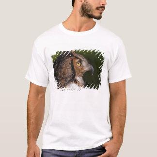 Grand hibou à cornes, virginianus de Bubo, captif T-shirt