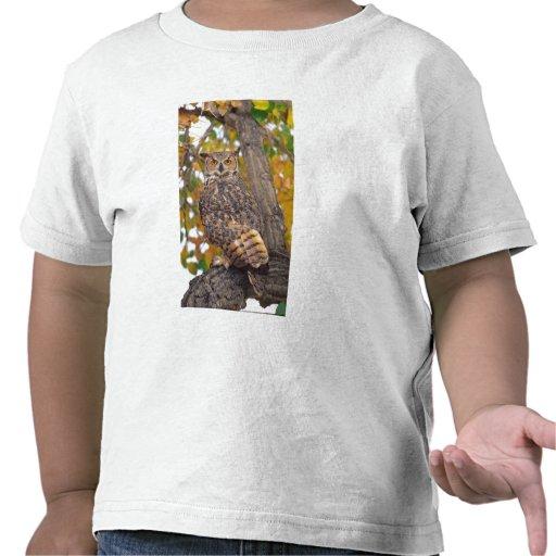 Grand hibou à cornes, virginianus de Bubo, indigèn T-shirts