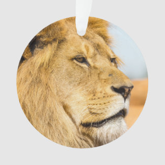 Grand lion regardant loin