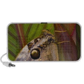 Grand papillon de jeune hibou (tamarindi d'Opsipha Haut-parleurs PC