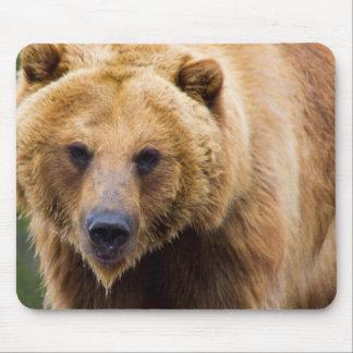 Grande assez fin d'ours gris tapis de souris