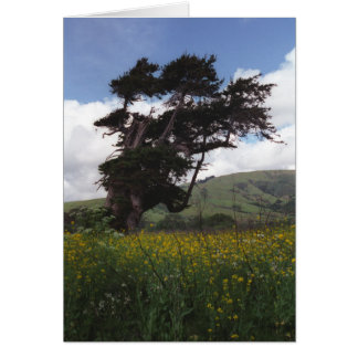 Grande carte d'arbre de Sur