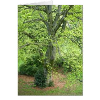 Grande carte de voeux verte d'arbre