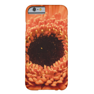Grande marguerite orange de Gerbera Coque iPhone 6 Barely There