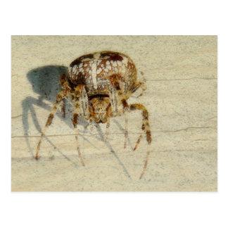 Grande, très, araignée effrayante et velue carte postale