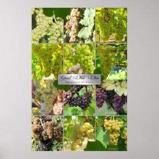 Grandes variétés de vin blanc du monde affiches