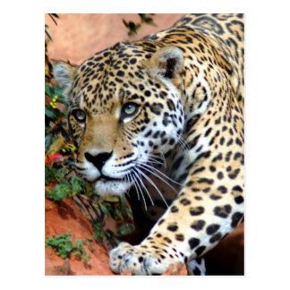Grands chats - 10 carte postale