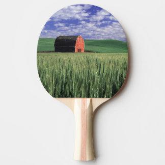 Grange rouge dans le domaine de blé et d'orge en raquette tennis de table