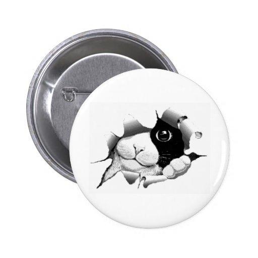 Graphique sournois curieux mignon de chaton de cha badge avec épingle