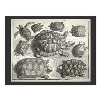 Gravure à l'eau-forte vintage de tortue cartes postales