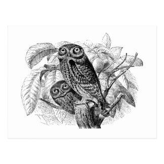 Gravure du bois vintage d'arbre de hiboux de hibou cartes postales