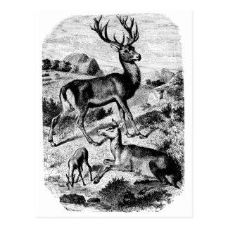 Gravure du bois vintage de cerfs communs rouges carte postale
