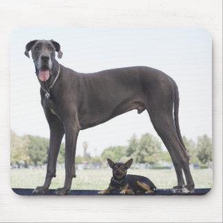 Great dane et petit chien de mélangé-race tapis de souris
