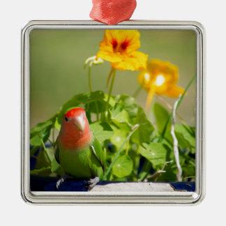 Green bird in a spring garden ornement carré argenté