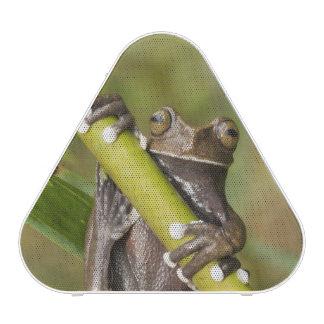 Grenouille d'arbre captive de Tapichalaca Hyloscir Haut-parleur Bluetooth