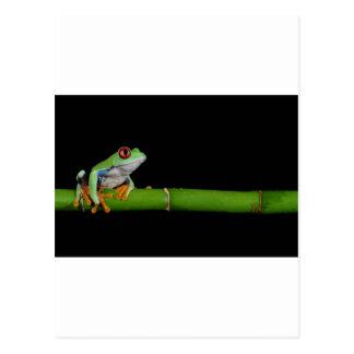 grenouille d'arbre observée par rouge carte postale