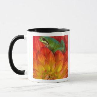 Grenouille d'arbre Pacifique sur des fleurs dans Mug