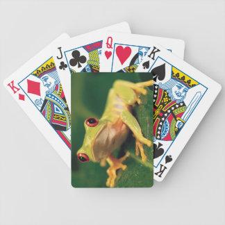 Grenouille d'arbre rouge d'oeil jeu de cartes