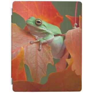 Grenouille d'arbre verte dans l'automne protection iPad