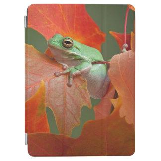 Grenouille d'arbre verte dans l'automne protection iPad air
