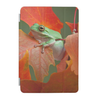 Grenouille d'arbre verte dans l'automne protection iPad mini