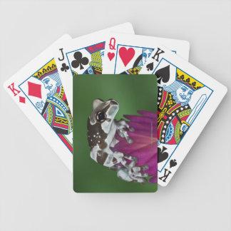 Grenouille de lait, resinifictrix de Trachycephalu Jeu De Poker