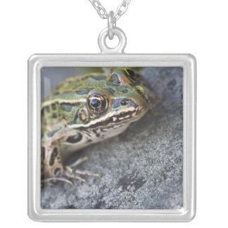 Grenouille de léopard du nord, île transparente, collier