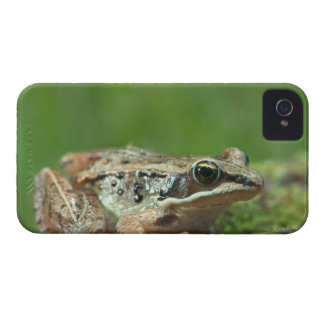 Grenouille en bois. Sylvatica de Rana Coques iPhone 4 Case-Mate