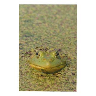 Grenouille verte en lenticule, Canada Impression Sur Bois