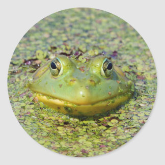 Grenouille verte en lenticule, Canada Sticker Rond