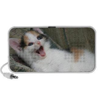 Griffonnage de chaton de calicot haut-parleur