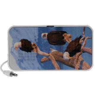 Griffonnage d'Eagles chauve Haut-parleurs Ordinateur Portable