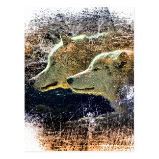 Gris solitaire de meute de loups sauvage de nature carte postale