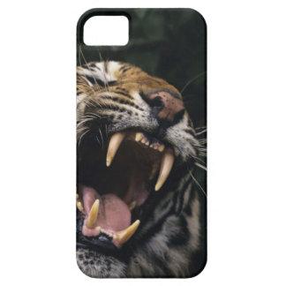 Grondement de tigre de Bengale (Panthera le Tigre Coque iPhone 5