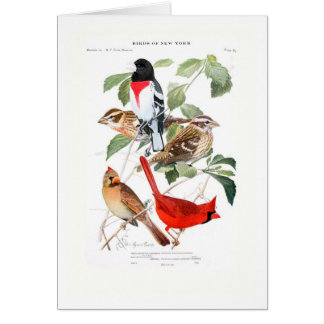 Gros-bec et cardinal carte de vœux