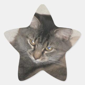 gros chat mignon sticker en étoile