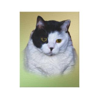 Gros chat noir et blanc toiles