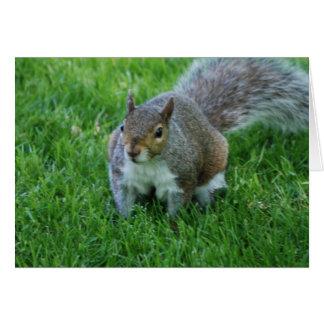 Grosse carte de voeux d'écureuil