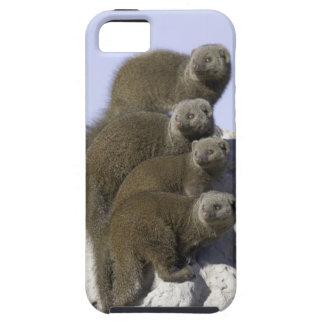 Groupe de la mangouste naine sur un monticule de coque iPhone 5