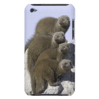 Groupe de la mangouste naine sur un monticule de coques iPod Case-Mate
