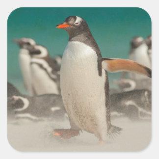 Groupe de pingouin sur la plage, Malouines Sticker Carré