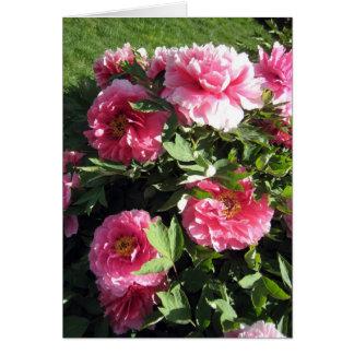 Groupe de pivoines roses carte de correspondance
