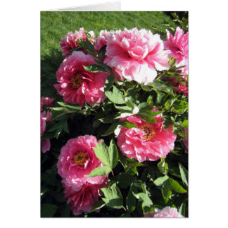 Groupe de pivoines roses cartes de vœux
